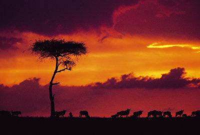 AFRICA: KENYA, SAFARI, ZANZIBAR