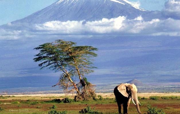 Tanzania Safari da euro 1.590