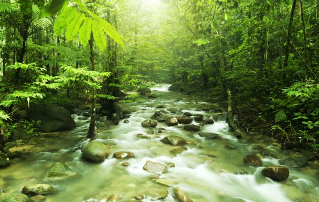Le foreste più belle del mondo