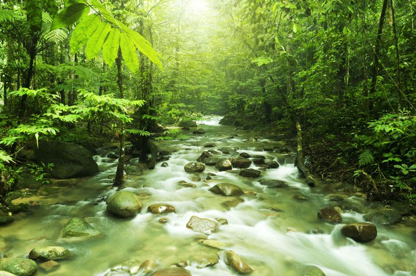 Le foreste pi belle del mondo volver viaggi e turismo for Pianta della foresta di pioppo