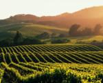 La California ed il vino 2/10 settembre con accompagnatore