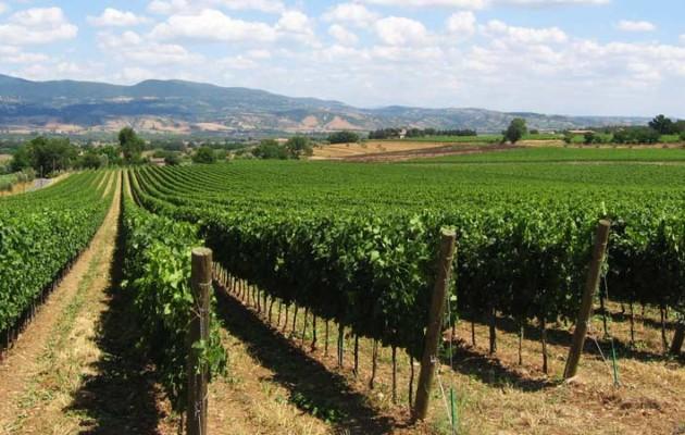 TUSCIA: vini, castelli e storia – 17/18 marzo da Genova
