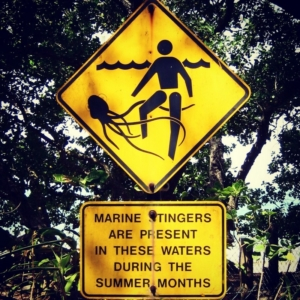 jellyfish danger