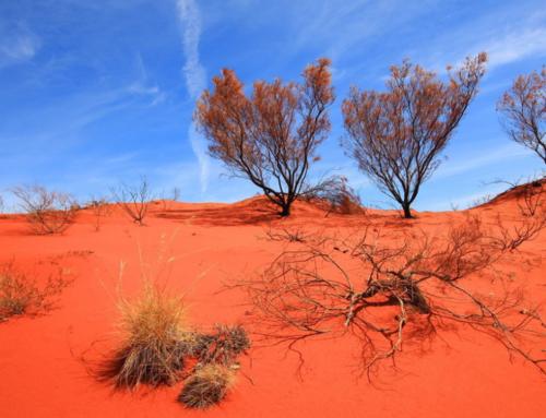 Un viaggio nel deserto dell'Australia