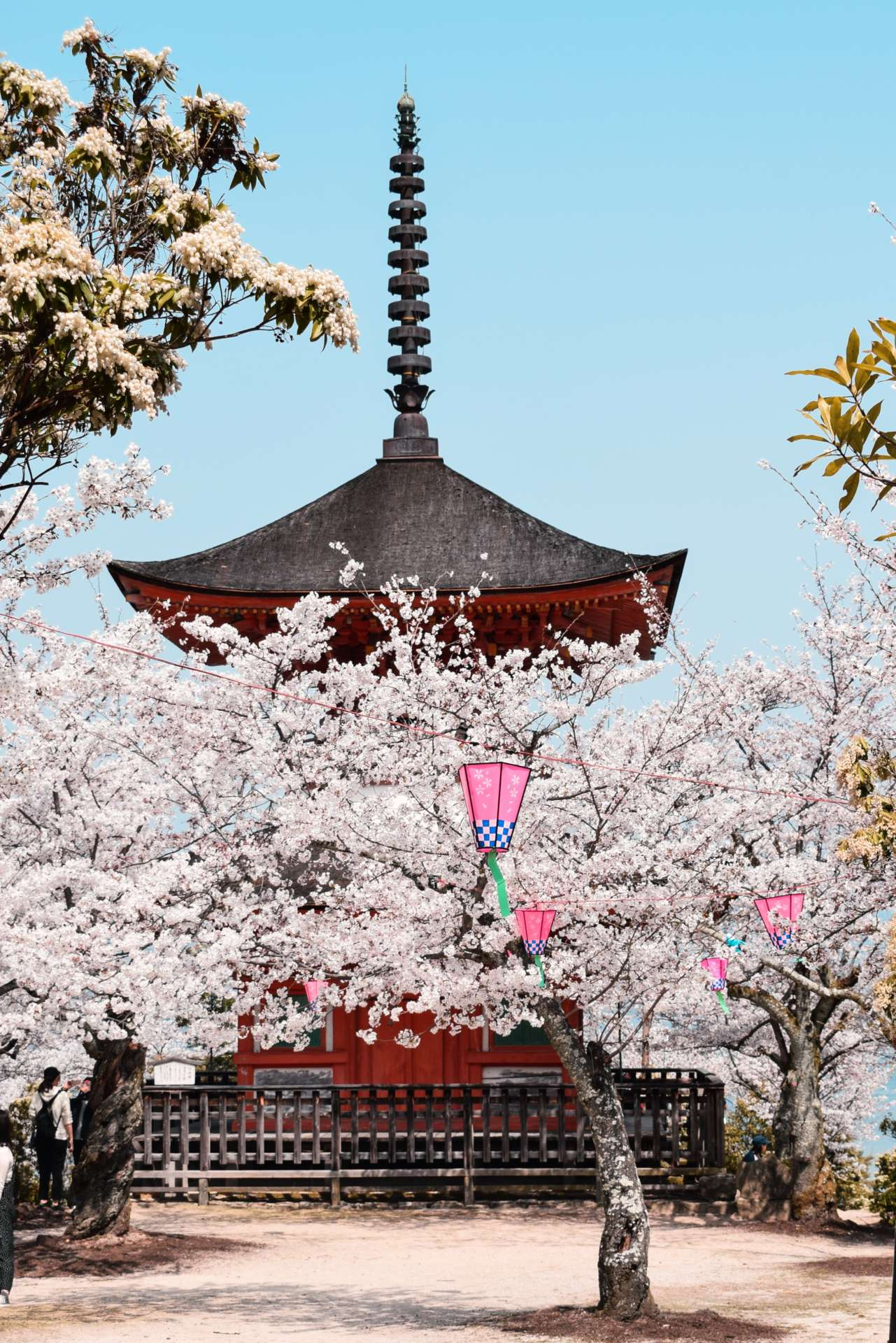 Sakura Giappone